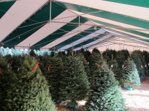 Tina's Tree lot