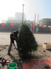 christmas-trees-1