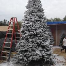 christmas-trees-2