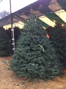 christmas-trees-4