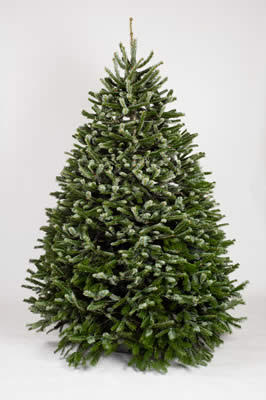 Types Of Fresh Christmas Trees